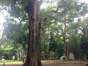 【学生におすすめの東京の街21】武蔵小山